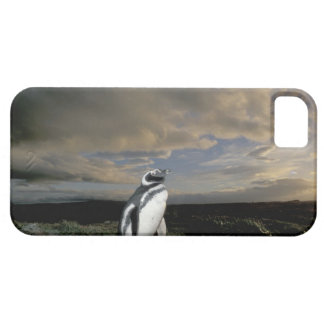 South America, Chile, Patagonia, Magellanes, iPhone 5 Cover