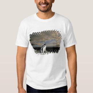 South America, Chile, Patagonia, Magellanes, T-shirts