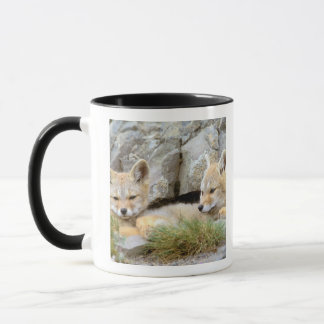 South America, Chile, Torres del Paine Mug