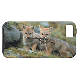South America, Chile, Torres del Paine National iPhone 5 Cover