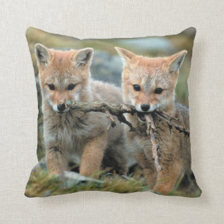 South America, Chile, Torres del Paine National Cushion