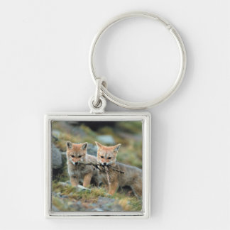 South America, Chile, Torres del Paine National Key Ring