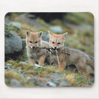 South America, Chile, Torres del Paine National Mouse Pad