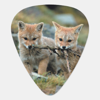 South America, Chile, Torres del Paine National Plectrum