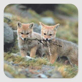 South America, Chile, Torres del Paine National Square Sticker