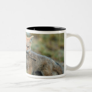 South America, Chile, Torres del Paine National Two-Tone Coffee Mug