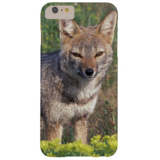 South America, Chile, Torres del Paine NP, Barely There iPhone 6 Plus Case