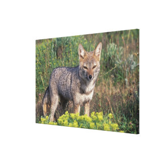 South America, Chile, Torres del Paine NP, Canvas Print