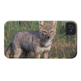 South America, Chile, Torres del Paine NP, iPhone 4 Case-Mate Cases