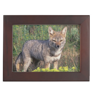 South America, Chile, Torres del Paine NP, Keepsake Box