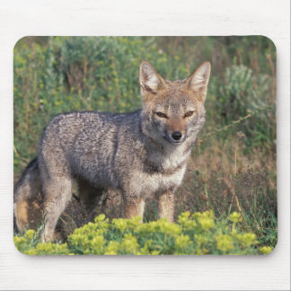South America, Chile, Torres del Paine NP, Mouse Pad