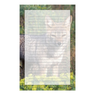 South America, Chile, Torres del Paine NP, Personalized Stationery