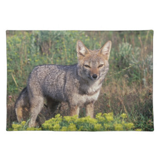 South America, Chile, Torres del Paine NP, Placemat