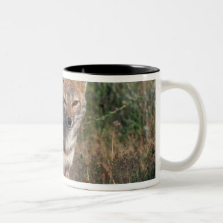 South America, Chile, Torres del Paine NP, Two-Tone Coffee Mug