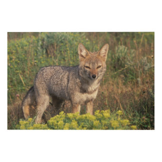 South America, Chile, Torres del Paine NP, Wood Wall Art