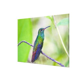 South America, Costa Rica, Sarapiqui, La Selva Canvas Print