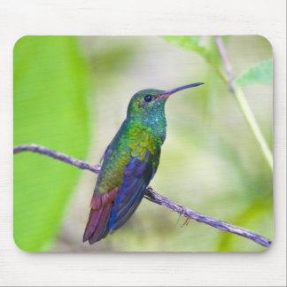 South America, Costa Rica, Sarapiqui, La Selva Mouse Pad