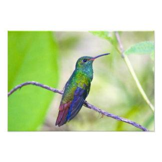 South America, Costa Rica, Sarapiqui, La Selva Photograph