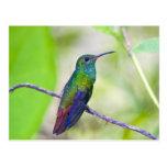 South America, Costa Rica, Sarapiqui, La Selva Postcard