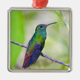 South America, Costa Rica, Sarapiqui, La Selva Silver-Colored Square Decoration