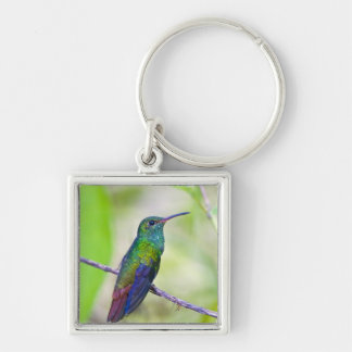 South America, Costa Rica, Sarapiqui, La Selva Silver-Colored Square Key Ring