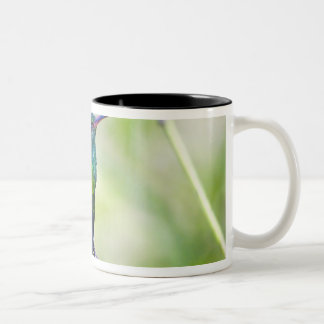 South America, Costa Rica, Sarapiqui, La Selva Two-Tone Coffee Mug