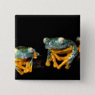 South America, Ecuador, Amazon. Leaf frogs 15 Cm Square Badge