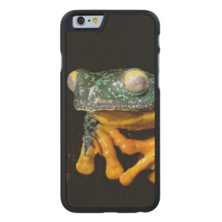 South America, Ecuador, Amazon. Leaf frogs Carved® Maple iPhone 6 Slim Case
