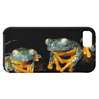 South America, Ecuador, Amazon. Leaf frogs iPhone 5 Covers