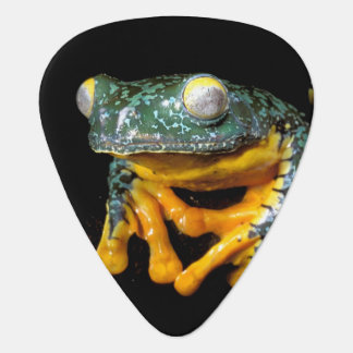 South America, Ecuador, Amazon. Leaf frogs Guitar Pick