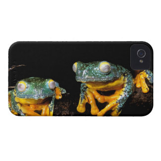 South America, Ecuador, Amazon. Leaf frogs iPhone 4 Cover