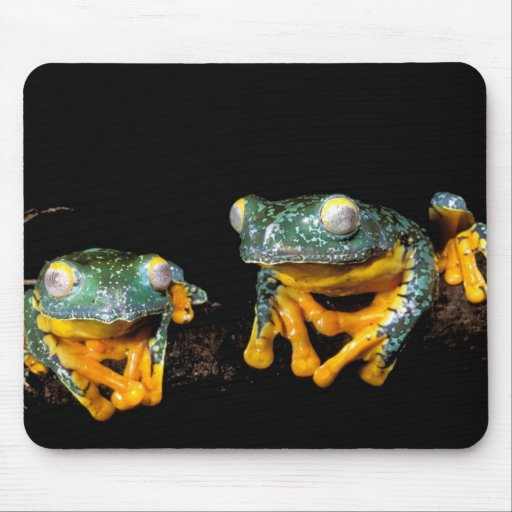 South America, Ecuador, Amazon. Leaf frogs Mouse Pads