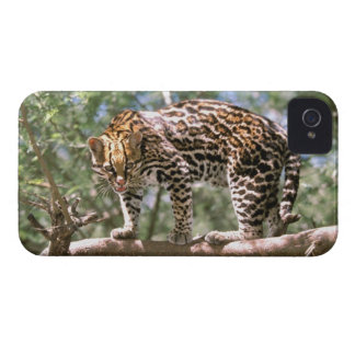 South America, Ecuador, Amazon. Ocelot iPhone 4 Covers
