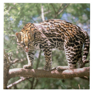 South America, Ecuador, Amazon. Ocelot Tile