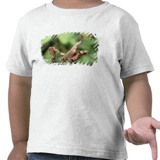 South America, Ecuador, Amazon. Praying Mantis Tee Shirts
