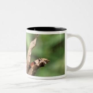 South America, Ecuador, Amazon. Praying Mantis Two-Tone Coffee Mug