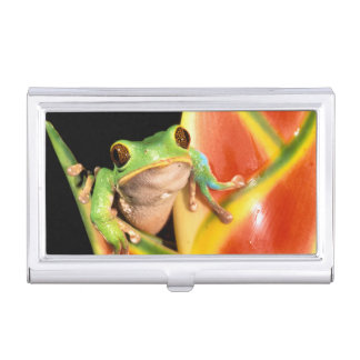South America, Ecuador, Amazon. Tree frog Business Card Holder