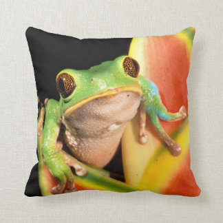 South America, Ecuador, Amazon. Tree frog Cushion