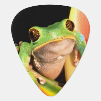 South America, Ecuador, Amazon. Tree frog Guitar Pick