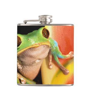 South America, Ecuador, Amazon. Tree frog Hip Flask