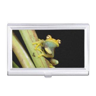 South America, Ecuador, Amazon. Tree frog (Hyla Business Card Holder