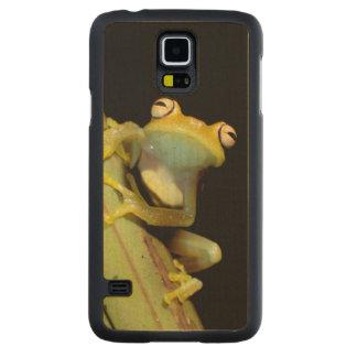 South America, Ecuador, Amazon. Tree frog (Hyla Carved Maple Galaxy S5 Case