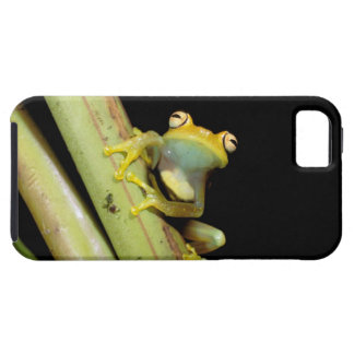 South America, Ecuador, Amazon. Tree frog (Hyla iPhone 5 Cover