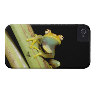 South America, Ecuador, Amazon. Tree frog (Hyla Case-Mate iPhone 4 Cases