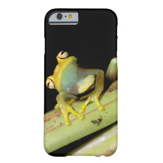 South America, Ecuador, Amazon. Tree frog (Hyla Barely There iPhone 6 Case