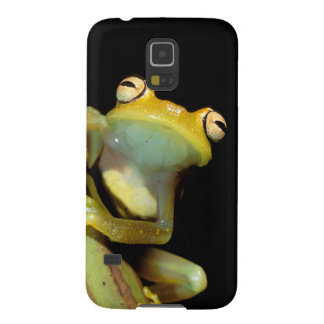 South America, Ecuador, Amazon. Tree frog (Hyla Galaxy S5 Cover