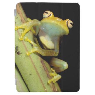 South America, Ecuador, Amazon. Tree frog (Hyla iPad Air Cover