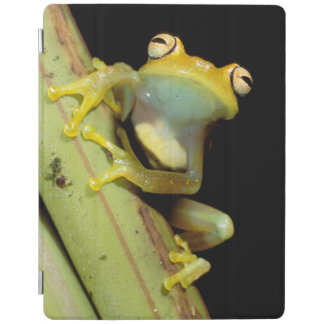 South America, Ecuador, Amazon. Tree frog (Hyla iPad Cover