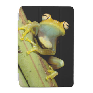 South America, Ecuador, Amazon. Tree frog (Hyla iPad Mini Cover