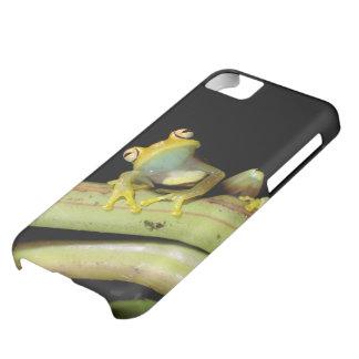 South America, Ecuador, Amazon. Tree frog (Hyla iPhone 5C Case